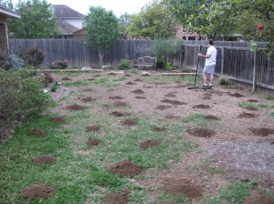 Green Thumb The Lawn Gets A Makeover While Everyone