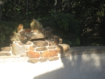 New fountain. We would have loved for there to be less grout showing but it is much better than the previous waterfall.